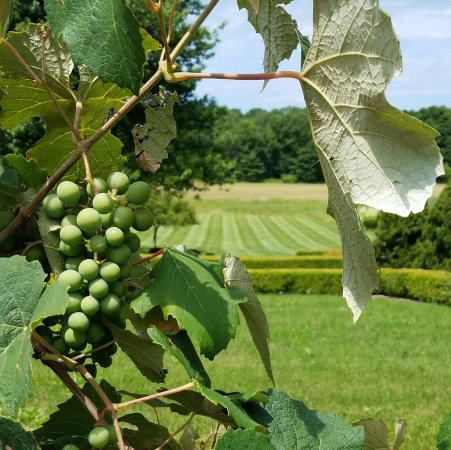 Beacon, NY: We offer great experiences of the Hudson Valley, including a wine tour.