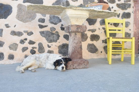 Karterádhos, กรีซ: The dogs on Caveland's property are very sweet and calm