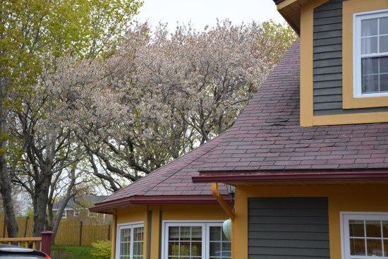Harbour Grace, Καναδάς: Cherry Tree