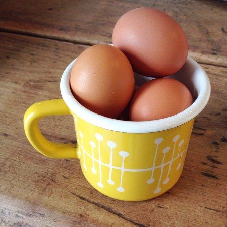Wymondham, UK : The Hen House & Egg Shed