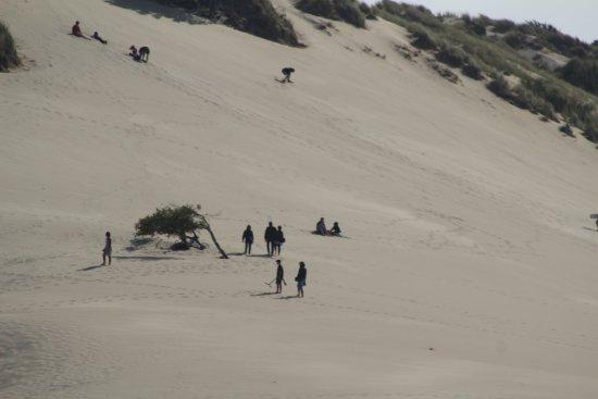 Ρίντσπορτ, Όρεγκον: Sand dune surfing!