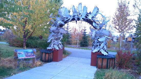 A Moose in the Garden: IMAG1587_large.jpg