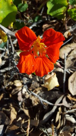 William Randolph Hearst Memorial Beach: Great Wildflowers