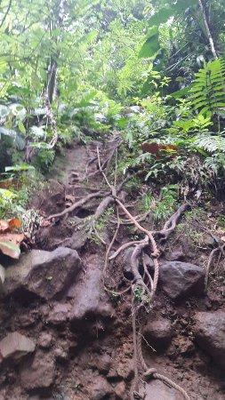 Basse-Terre, Guadeloupe: 20160629_205813_large.jpg
