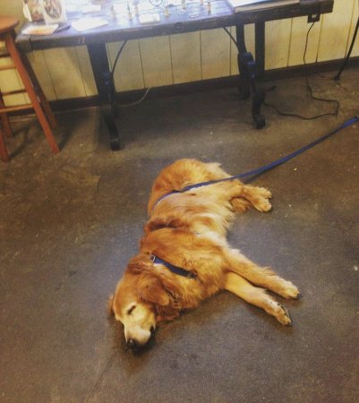 Murphys, Californië: Our cool concrete floors are greatly appreciated by dog visitors!