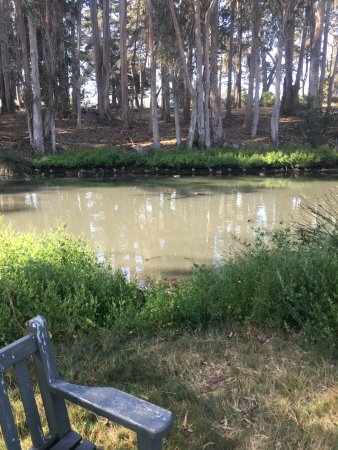 Baywood Park, CA: Sweet Springs Nature Reserve - 1/2 mile from the Inn