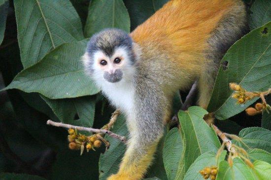 Hotel Si Como No: Squirrel monkey