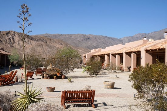 Palm Grove In Anza Borrego Park Picture Of Borrego