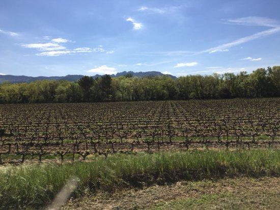 Violes, Francja: la vue sur les vignes