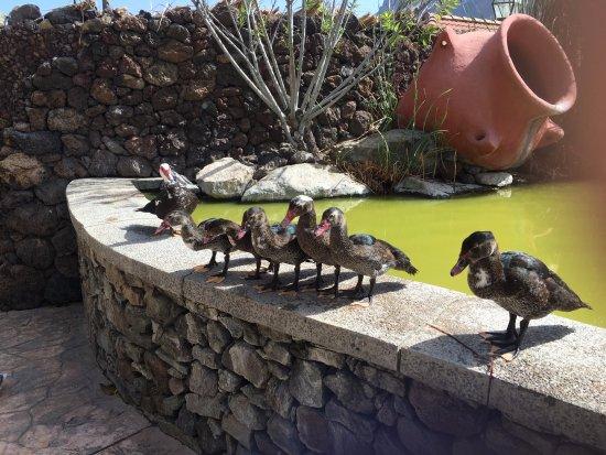 San Nicolas, España: Cactualdea Park
