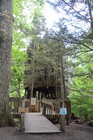 Cayuga Nature Center : Our TreeTops treehouse is 6-stories high!