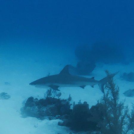 Dive Provo : shark