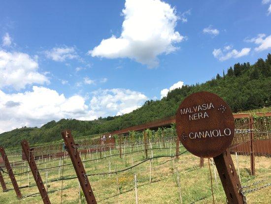 San Casciano in Val di Pesa, Italien: photo4.jpg