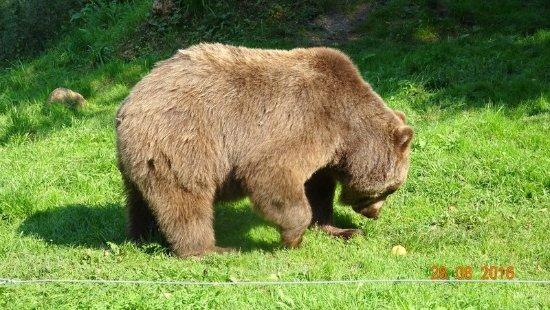 Bad Stuer, Tyskland: bei der Futtersuche