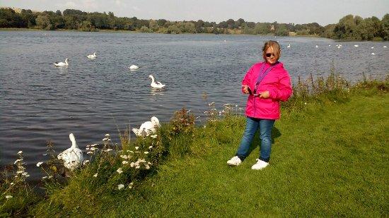 Linlithgow, UK: IMG_20160818_162140_large.jpg