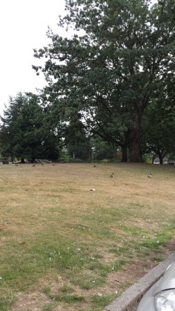 Burnaby, Canadá: Wide open spaces...( and ducks and squirrels out there, too!)