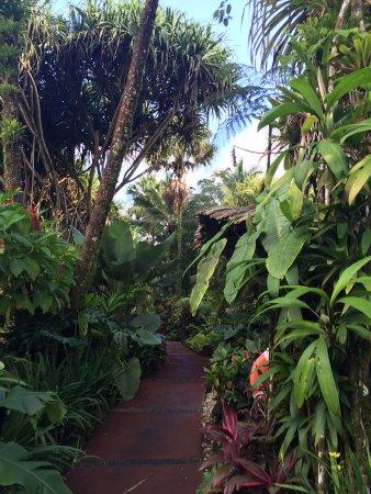 Tabacon Grand Spa Thermal Resort: Hot Springs