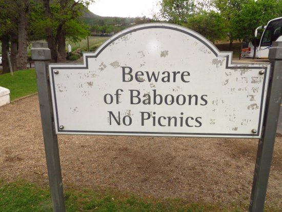 Constantia, Südafrika: watch out for the baboons