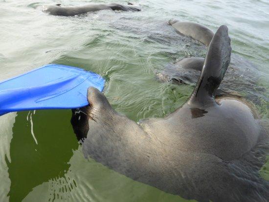 Γουάλβις Μπέι, Ναμίμπια: Pelican Point