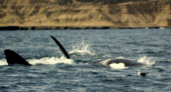 Whales Argentina : lo maximo!!!