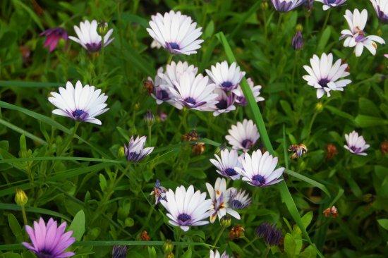 Swansea, Australien: beautiful flowers all around