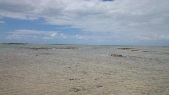 Patacho Beach: DSC_0332_large.jpg