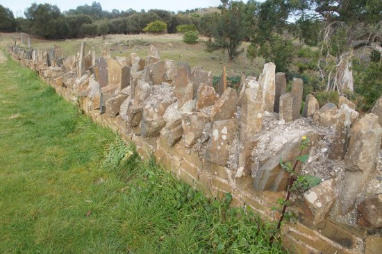 Swansea, Australien: close-up of the spikes