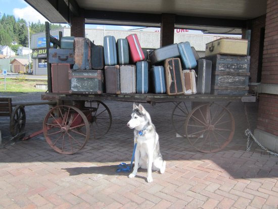 Lewis County Historical Museum: Old luggage and my dog
