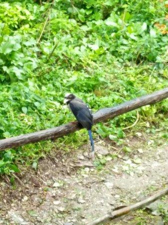 Pangot, India: IMG_20160731_071422_large.jpg