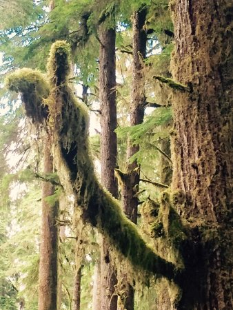 Olympic National Park and Forest Lake Quinault Tours