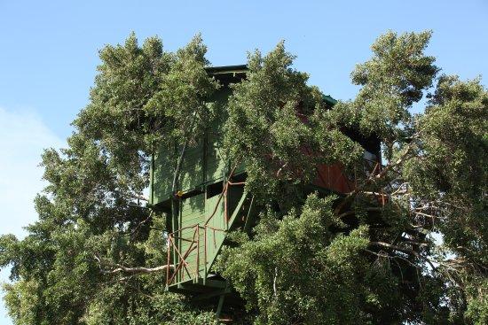 Yala Luxury Tree House