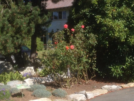 Mission, Canada: A rosebush by itself