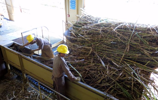 Chamarel: Workers feeding the sugar cane into the crusher