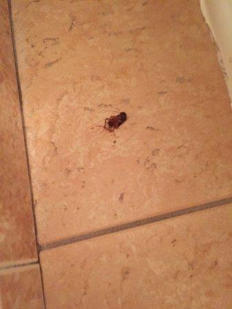 Marina Inn and  Suites: Uma barata no banheiro!!!!!!
