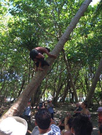 Muri, Islas Cook: Speed palm climbing