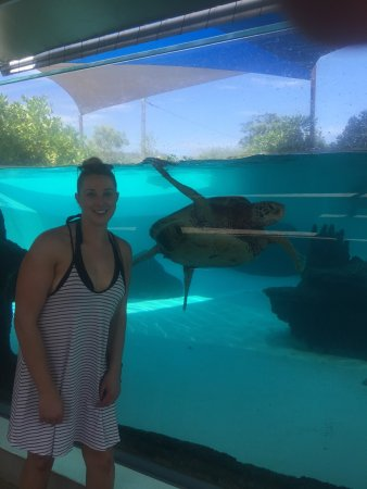 Aquarium des Lagons Nouvelle Caledonie: Loved the turtles. Reasonable price to enter and worth a look. Lots of different species but the