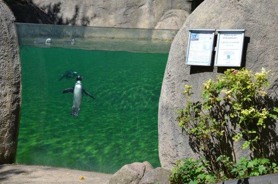 Wuppertaler zoo