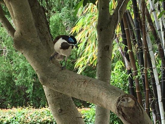 Jardín Botánico y Zoológico de Rockhampton: photo0.jpg