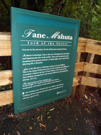 Waipoua Forest, Nueva Zelanda: le roi de la forêt