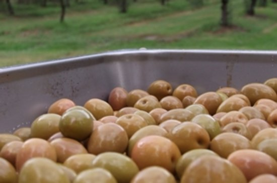 Lovedale, Australië: Smoked Olives from our Olive Grove