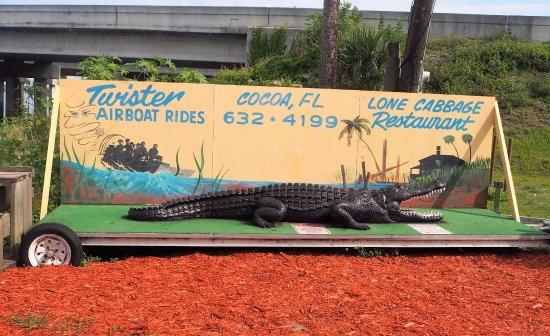 Cocoa, FL: Big Alligator