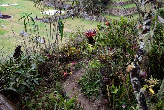 Botanical garden machu picchu picture of jardin botanico for Au jardin botanic gardens