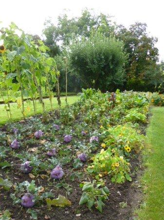 Rathnew, Irlanda: vegetable kitchen garden