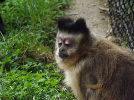 Foto de Monkey World