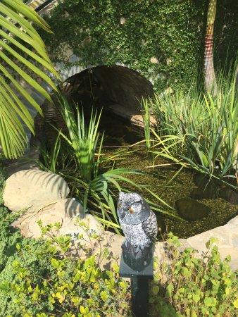 Hotel Bel-Air: jardin