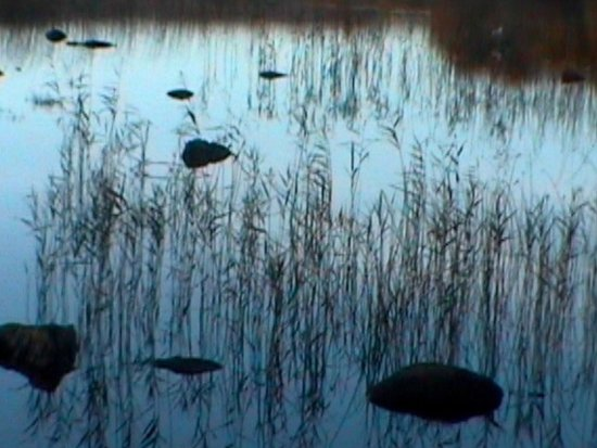 Condado de Galway, Irlanda: Ross lake early morning.