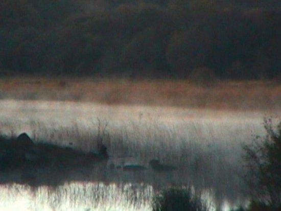 Condado de Galway, Irlanda: Morning mist softens the edges.