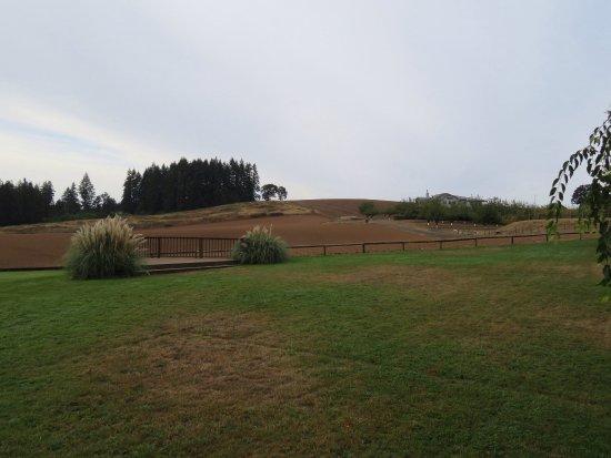 Carlton, Орегон: photo3.jpg