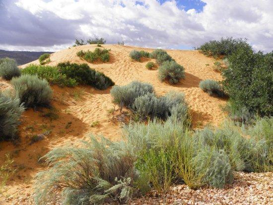 Coral Pink Sand Dunes State Park: arrivo al parcheggio