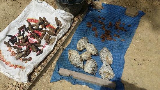 หมู่เกาะมะริด (เมองุย), พม่า: Sea Produce